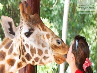 Daily Sapanca Lake Masukiye & Zoo