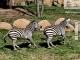 Daily Sapanca Lake Masukiye & Zoo 2